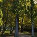 Aranyló ősz