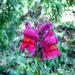 Album - Virágok