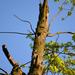 Beszélő fa
