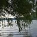 Élő Tisza, ez nem a tó