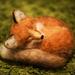 Foxy 2000