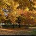 színes fák