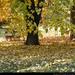 színes fák6