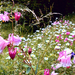 útszéli vadvirágok