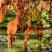 Vácrátóti ősz 2