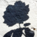 Rózsa karagöz