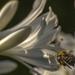 rovarok a kertemben