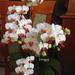 több mint 50 virággal