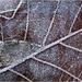 Téli álom jégkristályokba zárva