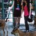 Állatkerti simogatás