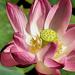Album - virágok, fák - növények
