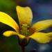 Főleg sárga