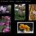 Lila májvirág fotóm a top 6 között. 2014.11.16.