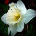 Album - Fehér virágok