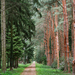 Arborétum 594