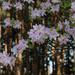 Arborétum 268