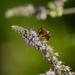 Virág és a méhecske