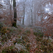 Télies ősz