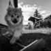 Paddy kutya kamu-Gilden módra arconvakuzva