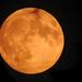 Felkelt a szuper Hold telihold 2015.09.27.