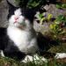 Kázmér a macska fotómodell
