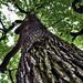 Album - Égig érő fák! Faágak Gyökerek Fák virágai