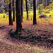 Fantázia színekbe öltözött erdő. Ez a fura erdő :D