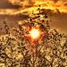 Lassan lemegy a Nap
