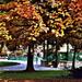 Erzsébet kert Sopron ősz