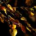 Alkonyodik. Elkapott fények a leveleken