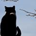 Album - Macskák cicák