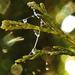 Ködcseppek,zöld és a elhagyott pókháló