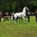 ANNO: Széchenyi-kastély . Mének és a lovászok