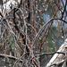 Esőcseppes faágak