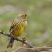 Énekes madarak és egyéb