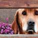 A kíváncsi kutya