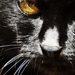 Fekete cica-mica