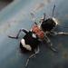 Gyűjtemény - Bogarak,rovarok