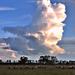 Legelésző gulya és a hatalmas felhők