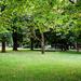 Park Nyár Fák