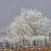 Január Évszakok Tél 17