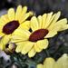 Kerti virágok