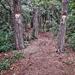 Erdő Túra Nyár