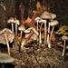Gombák a sötétben