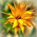 Virág Sárga Ősz