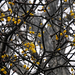 Fagyöngy Köd Sárga bogyók