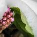 Hópaplan Virág Tavasz