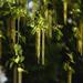 Nyírfavirág Barka Tavasz