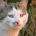 Egy kandúr cica