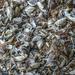 Balatoni kagylók